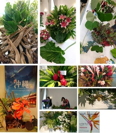 沖縄の花たちと⑤(Web大)