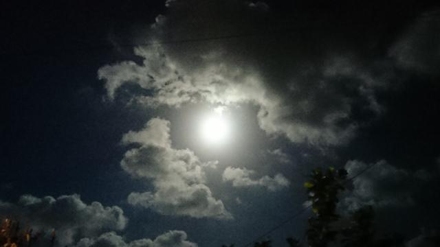 月①(Web大)