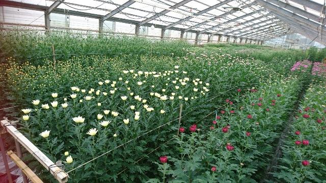 植物の成長記録①(Web大)