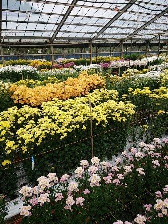 201808植物の成長記録③(Web小)