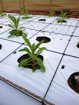 201810植物の成長記録②(Web小)