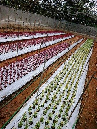 201810植物の成長記録③(Web小)