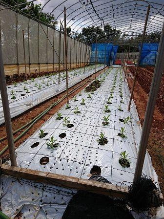 201810植物の成長記録①(Web小)