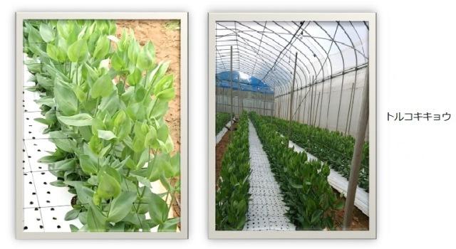 201812植物の成長記録加工②(Web小)