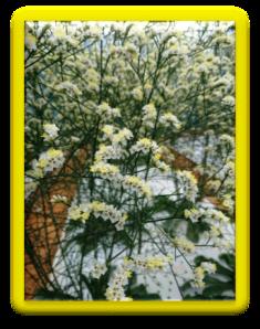 201901植物の成長記録⑨(電子メール大)