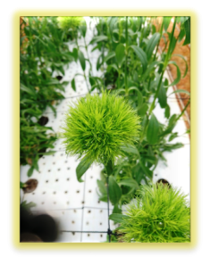 201901植物の成長記録⑤(電子メール大)