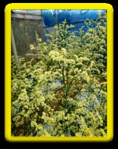 201901植物の成長記録⑧(電子メール大)