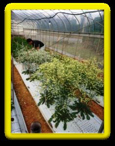 201901植物の成長記録⑦(電子メール大)
