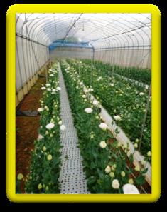 201901植物の成長記録①(電子メール大)