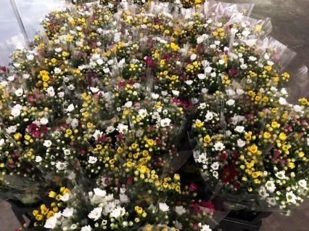 20190125花と食のフェスティバル③(Web小)