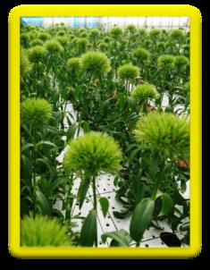 201901植物の成長記録④(電子メール大)