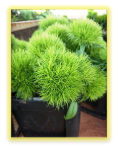 201901植物の成長記録⑥(電子メール大)