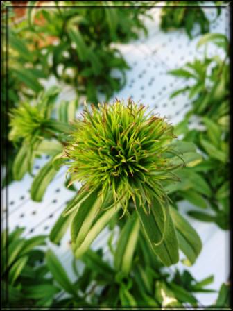 201902植物の成長記録②(Web小)