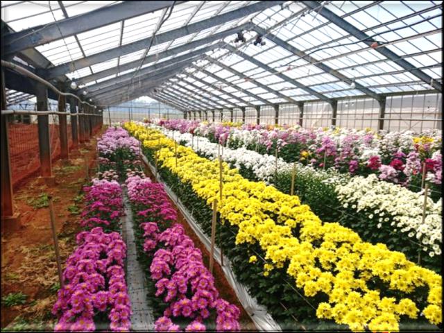 201902植物の成長記録①(Web大)