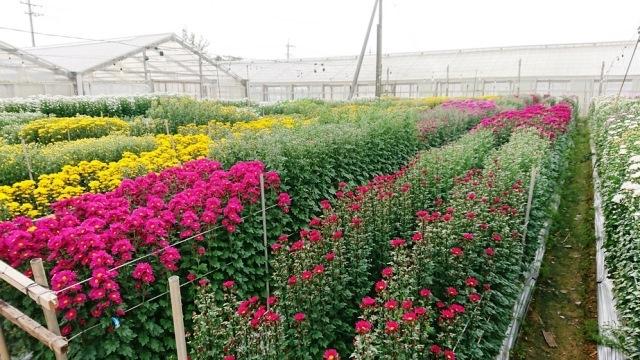 201903植物の成長記録①(Web大)