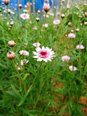 201904植物の成長記録②(Web小)