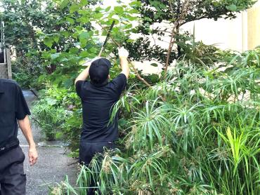 草刈り③ Web小