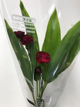 葉物・洋花パック⑦ Web大